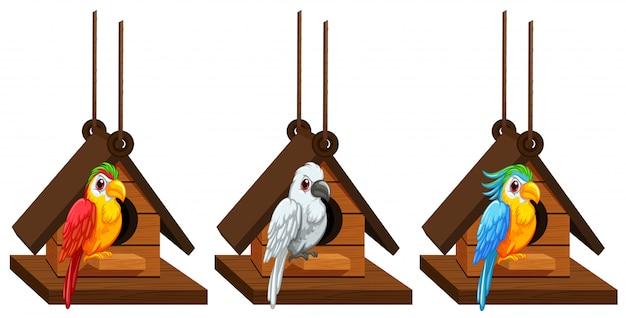 Papagaios de arara que vivem em birdhouse Vetor grátis