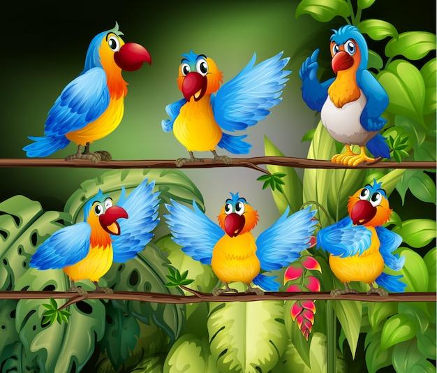 Papagaios Vetor grátis