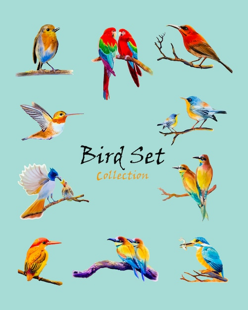 Pássaro conjunto aquarela pintura original colorido de pássaro Vetor Premium