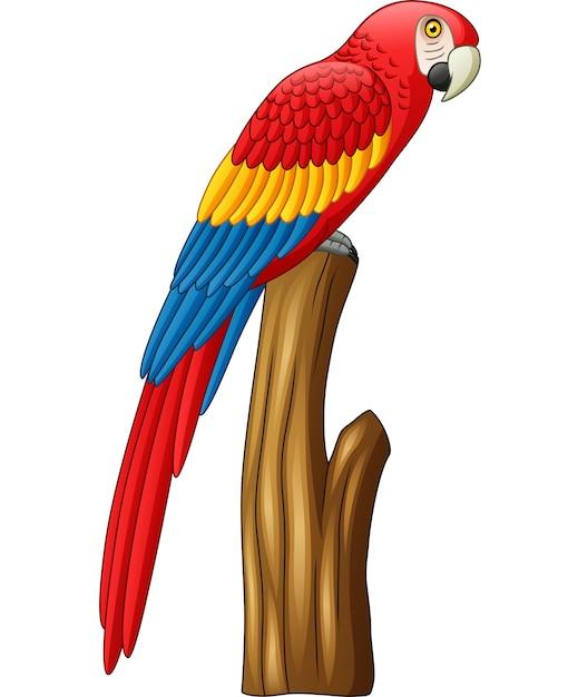 Pássaro de arara bonito dos desenhos animados Vetor Premium