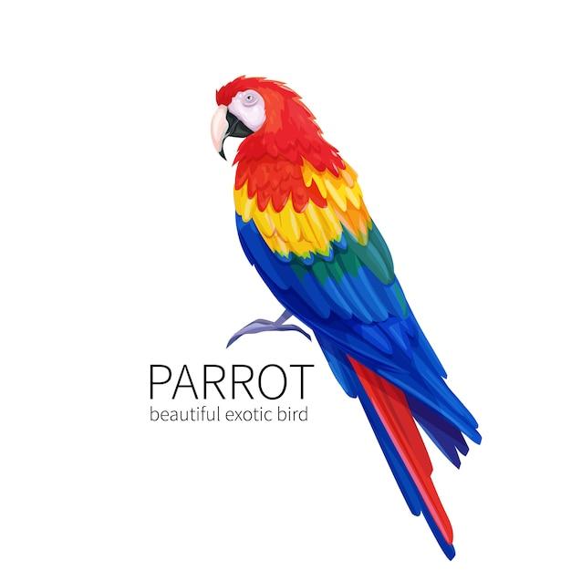 Pássaro papagaio Vetor Premium