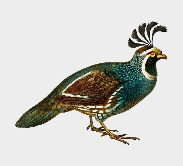 Pássaro Vetor grátis