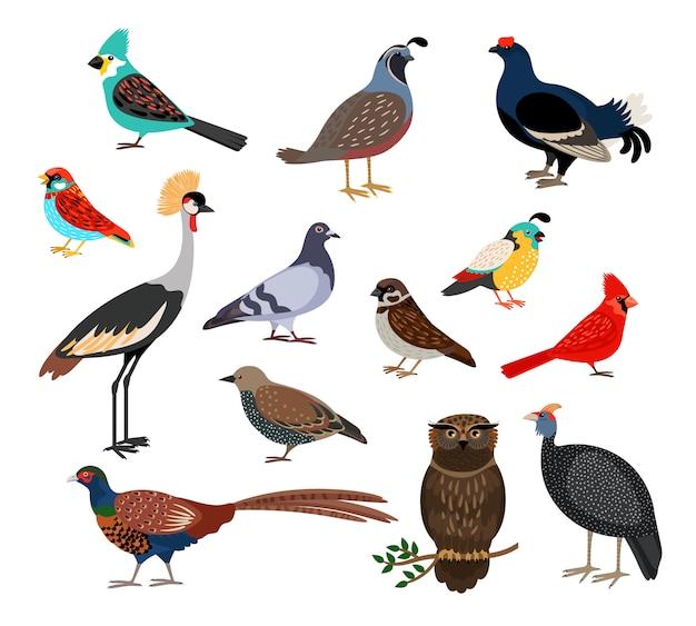Pássaros bonitos Vetor Premium