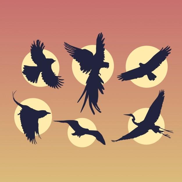 Pássaros de vôo silhuetas set Vetor grátis