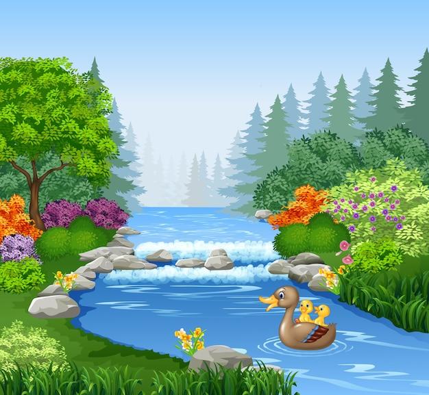 Pato bonito nadando na lagoa Vetor Premium