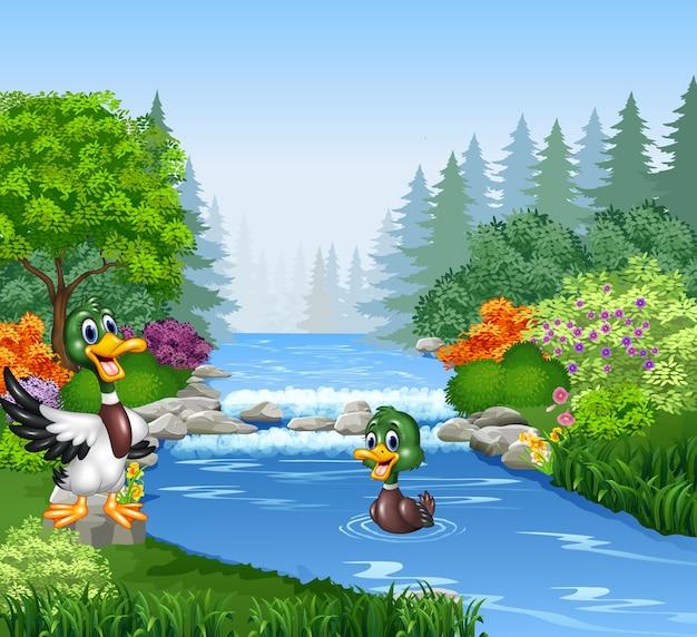 Pato dos desenhos animados no banco do rio Vetor Premium