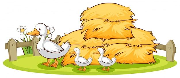 Patos e feno isolados Vetor grátis