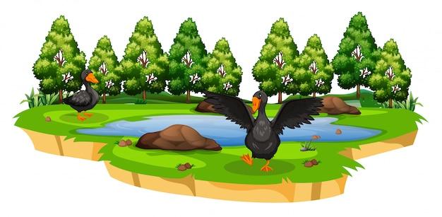 Patos na cena da natureza da lagoa Vetor grátis