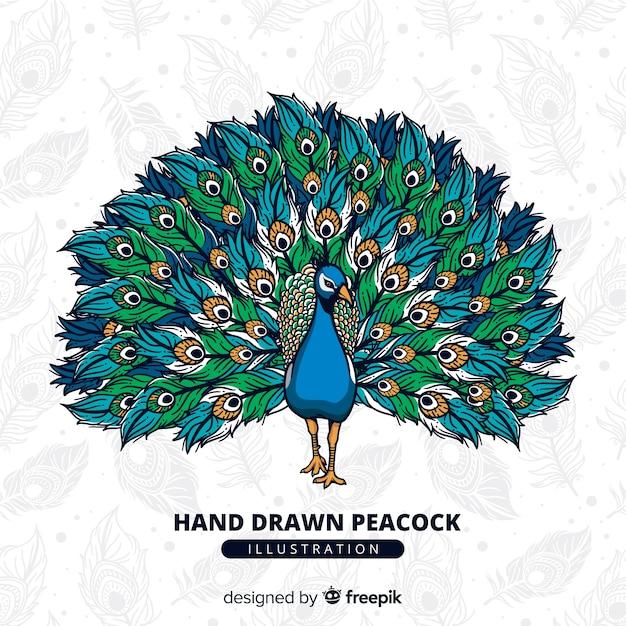 Pavão bonito na mão desenhada estilo Vetor grátis