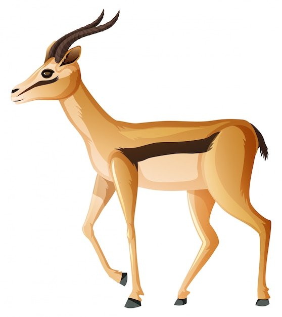 Pé bonito anelope em branco Vetor grátis