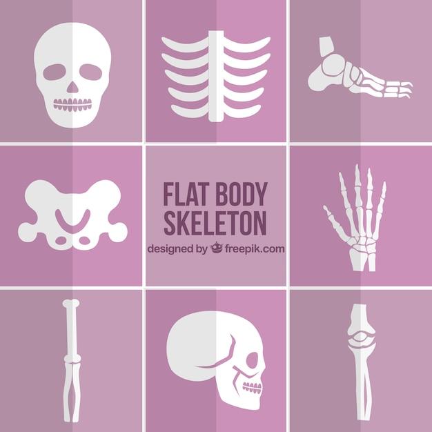 Peças de esqueleto em design plano Vetor grátis