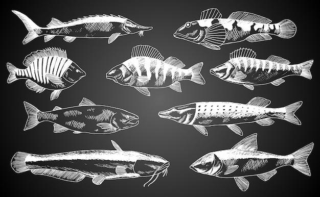 Peixe desenhado de mão. cartaz de loja de produtos de peixes e frutos do mar. pode usar como menu de peixe restaurante ou banner de fundo do clube de pesca. esboço de truta, carpa, atum, arenque, linguado, anchova Vetor Premium