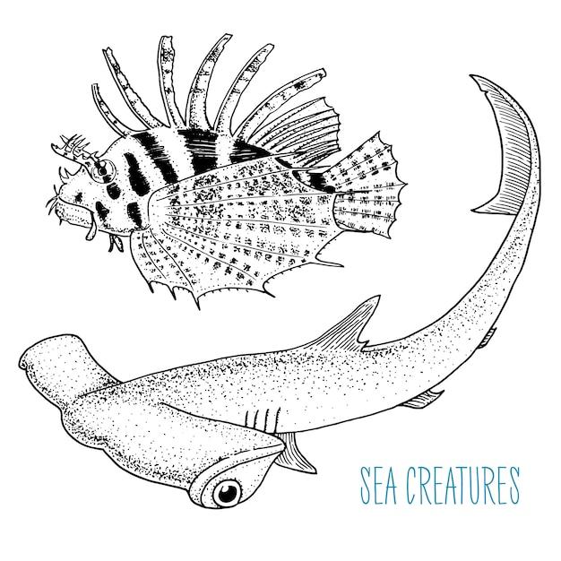 Peixe-leão vermelho de criatura do mar e grande tubarão-martelo. mão gravada desenhada no desenho antigo, estilo vintage. Vetor Premium