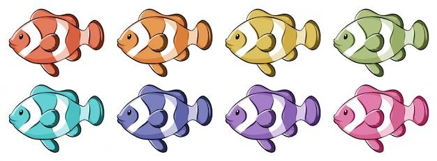 Peixe-palhaço em muitas cores Vetor grátis