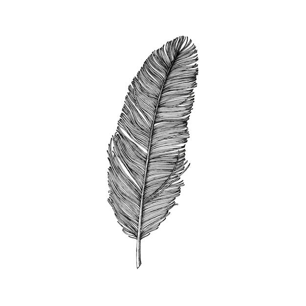 Pena desenhada de mão isolada no fundo branco Vetor grátis