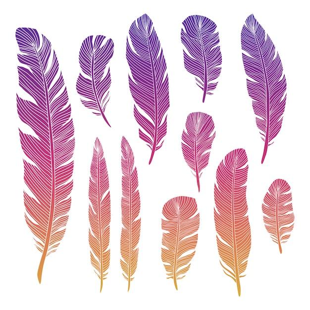 Penas de aves coloridas Vetor Premium