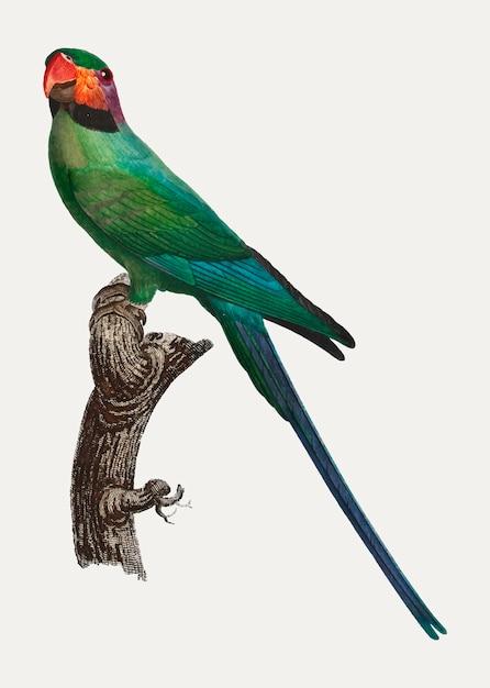 Periquito-de-cabeça-de-flor Vetor grátis