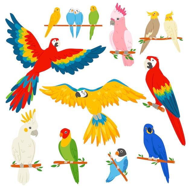 Personagem de papagaio papagaio e pássaro tropical ou arara exótica dos desenhos animados no conjunto de ilustração trópicos de passarinho tropical colorido sobre fundo branco Vetor Premium