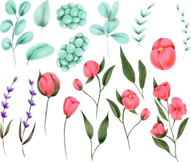 Pintados à mão coleção de elementos florais Vetor Premium
