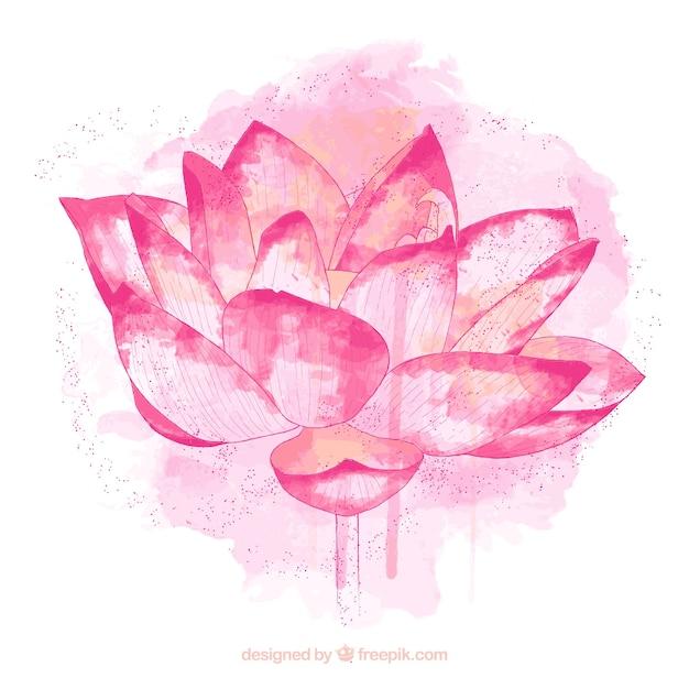 Pintados à mão flor de lótus Vetor grátis
