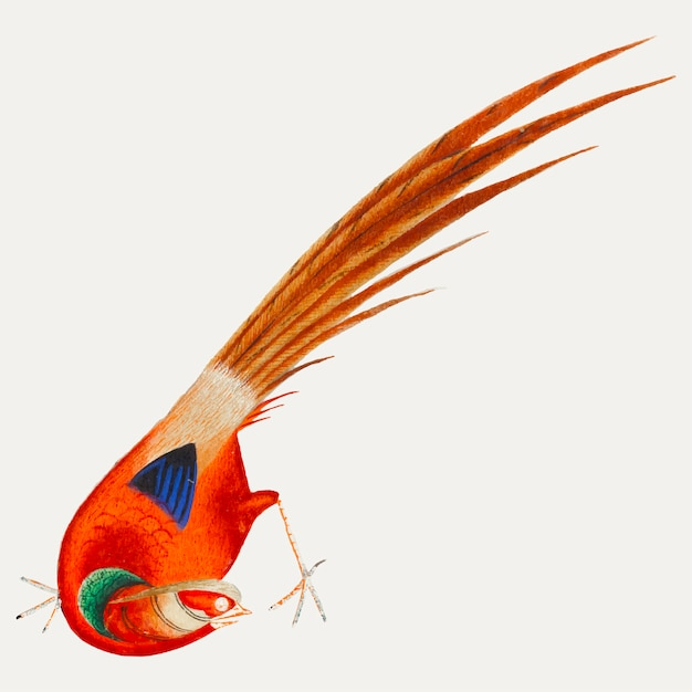 Pintura chinesa de um pássaro. Vetor grátis
