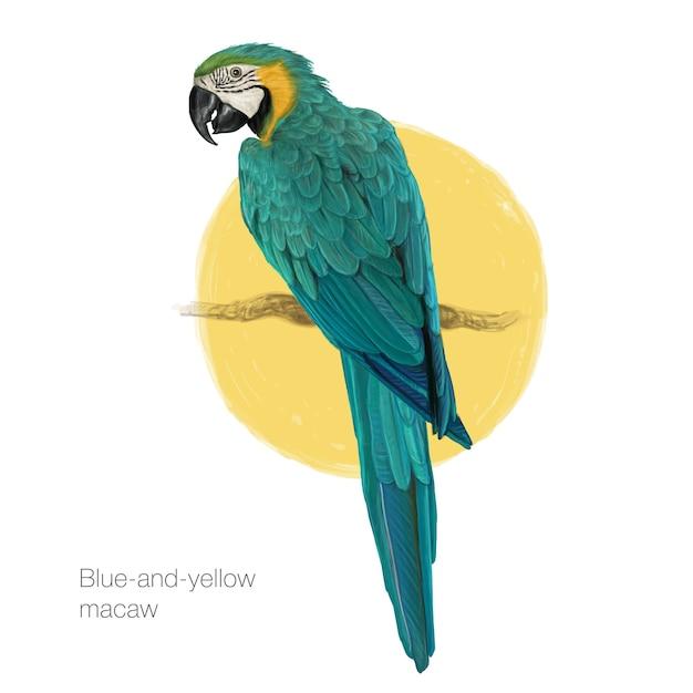 Pintura desenhada a mão de macaw blueandyellow Vetor Premium