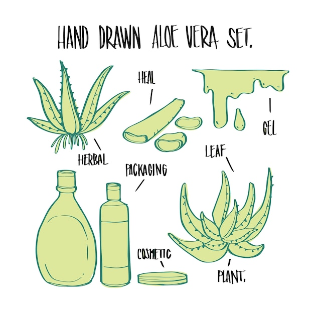 Planta e elementos de aloe vera desenhados a mão, vetor de ilustração para infográficos ou outros usos. Vetor Premium