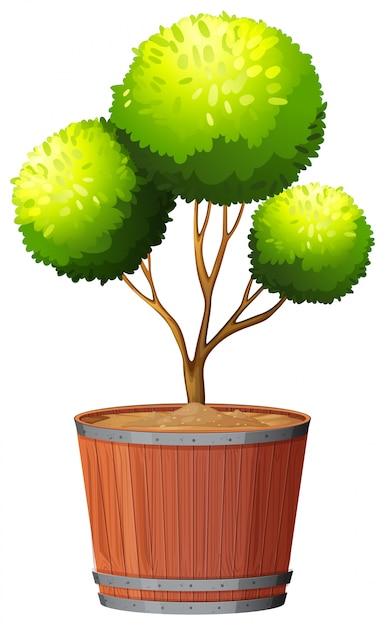 Planta em vaso com solo isolado Vetor grátis