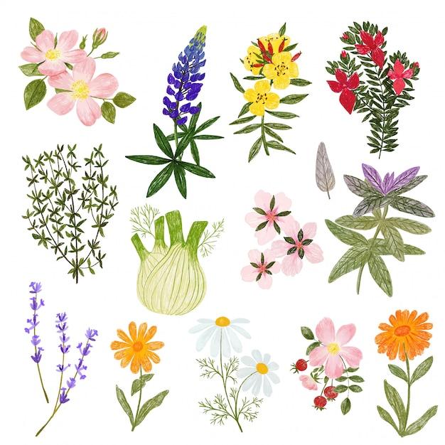 Plantas cosméticas, lápis mão desenhada estilo bonito Vetor Premium
