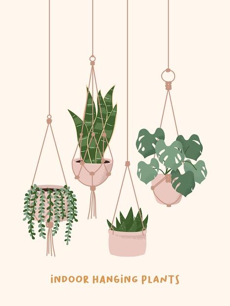 Plantas de cabides de macramé crescendo em vasos. string of pearls snake aloe monstera casa vaso de flores. Vetor Premium