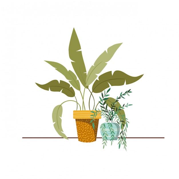 Plantas de casa com vasos Vetor Premium