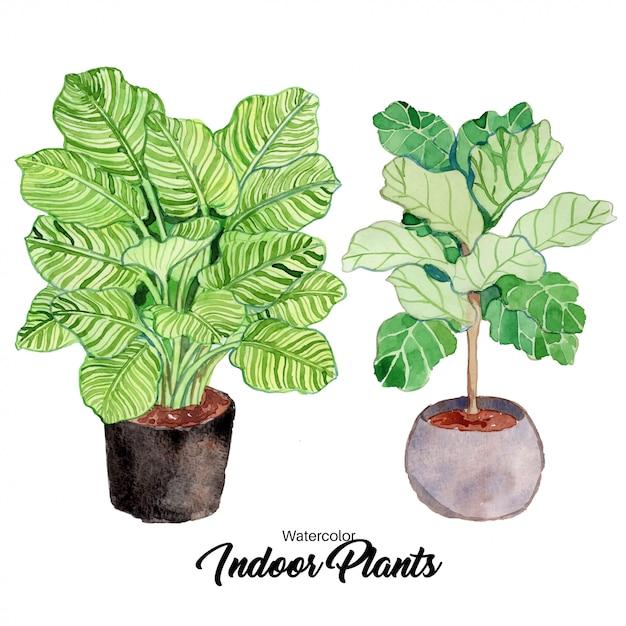 Plantas de interior em aquarela Vetor Premium