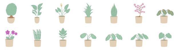 Plantas de interior em uma panela. plantas de casa isoladas no fundo branco. Vetor Premium