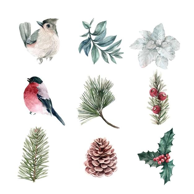 Plantas de inverno em aquarela e coleção de pássaros Vetor grátis