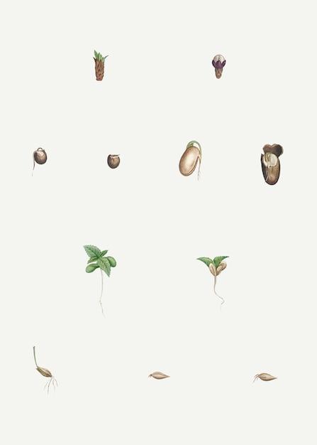 Plantas dissecadas Vetor grátis