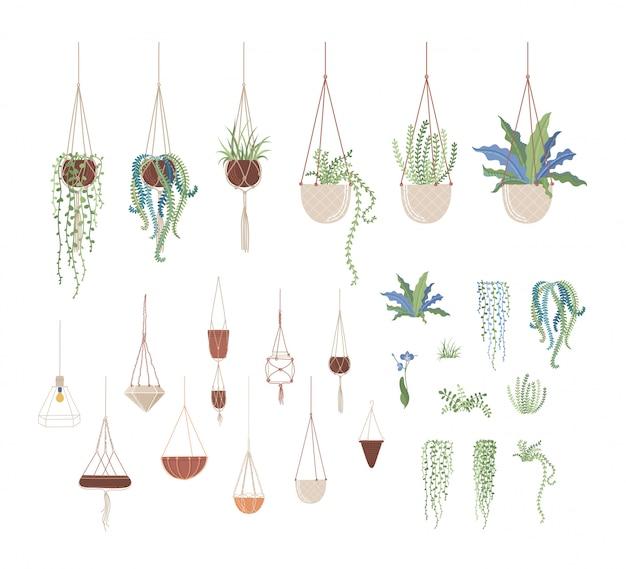 Plantas domésticas e vasos pendurados conjunto de ilustrações plana Vetor Premium