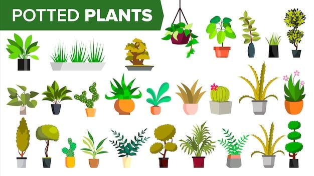Plantas em vasos Vetor Premium