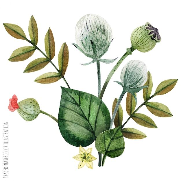 Plantas selvagens mão pintada em aquarela boutonniere Vetor Premium