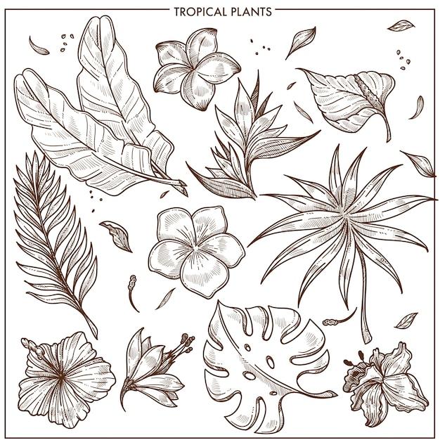 Plantas tropicais e flores exóticas esboçar vector coleção de conjunto de ícones isolados Vetor Premium