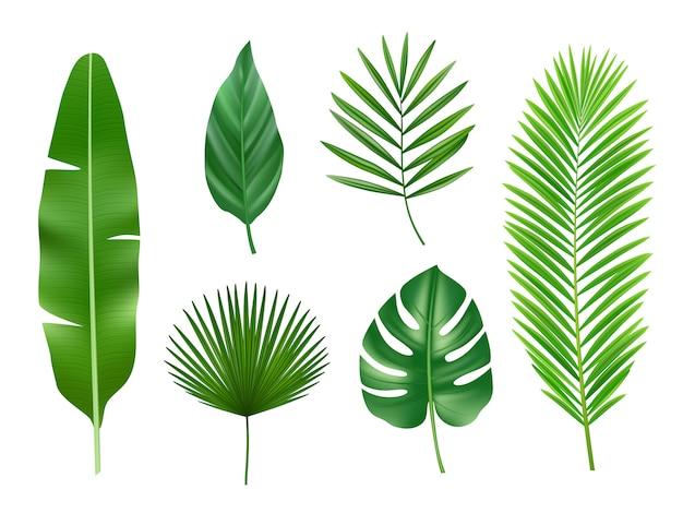 Plantas tropicais. eco exótico natureza verde folhas vector coleção realista isolada Vetor Premium