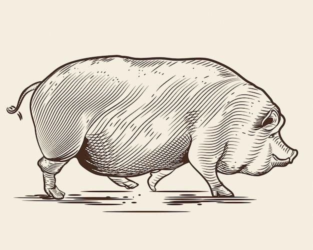 Porco no estilo de uma gravura. Vetor Premium