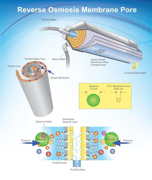 Poros da membrana da osmose reversa Vetor Premium