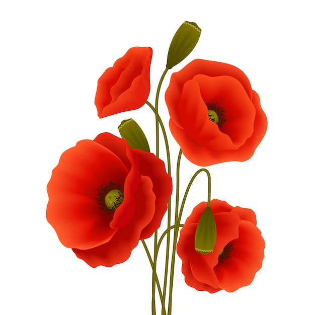 Poster da flor da papoila Vetor grátis