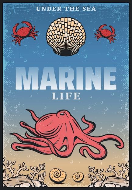 Pôster vintage colorido de vida marinha com a inscrição polvo caranguejos conchas e algas marinhas Vetor grátis