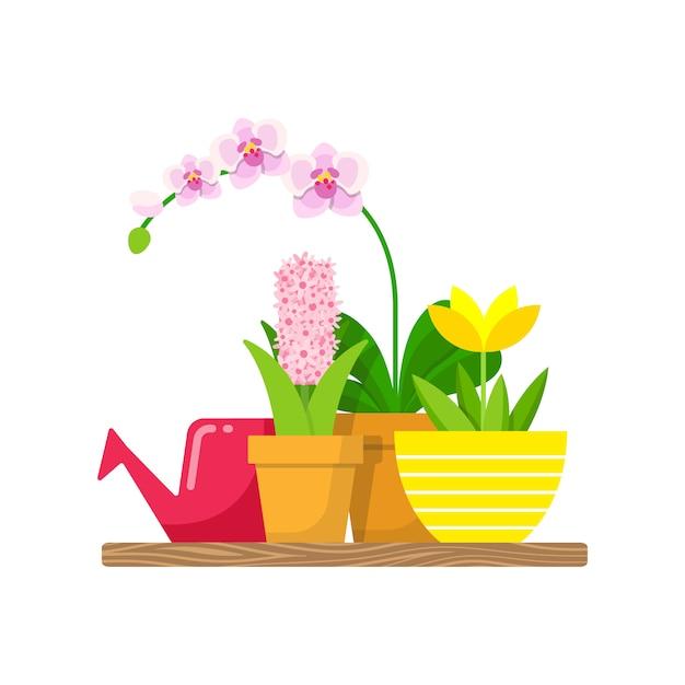 Prateleira com plantas domésticas e um regador para flores. orquídea phalaenopsis, lótus amarelo e jacinto rosa. Vetor Premium
