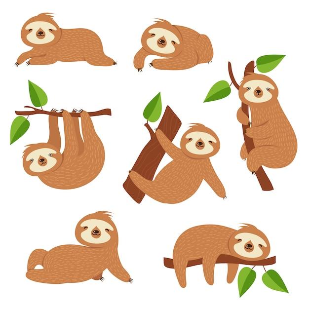 Preguiças fofas. preguiça dos desenhos animados, pendurado no galho de árvore. personagens de animais da selva bebê Vetor Premium