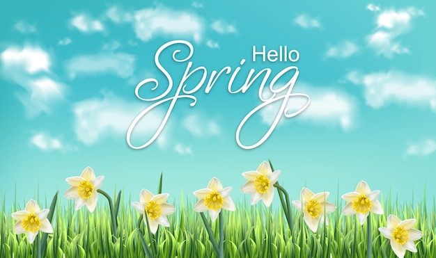 Primavera cartão narciso campos de flores Vetor Premium