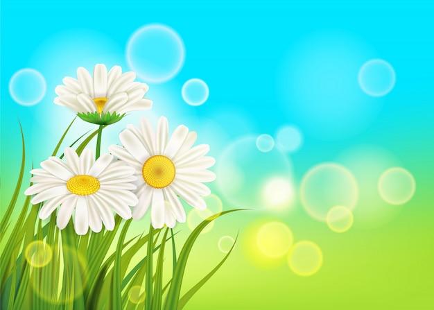 Primavera, margaridas, fundo, fresco, grama verde Vetor Premium
