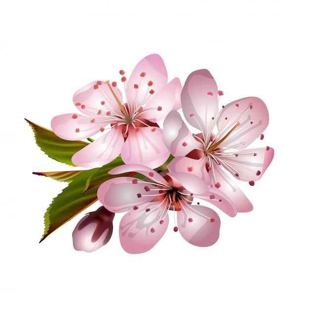 Primavera rosa sakura floresce Vetor Premium