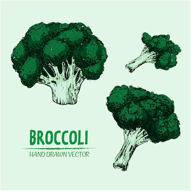 Projeto brócolis desenhada mão Vetor grátis